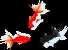 金魚のイラスト4