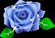 薔薇のイラスト2