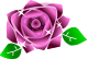 薔薇のイラスト4