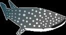 ジンベイザメのイラスト1