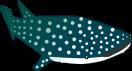 ジンベイザメのイラスト2