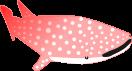 ジンベイザメのイラスト3