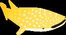 ジンベイザメのイラスト4
