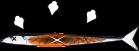 焼き秋刀魚のイラスト3