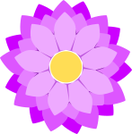 菊のイラスト4
