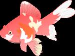 金魚のイラスト5