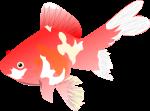 金魚のイラスト6