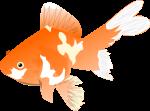 金魚のイラスト7