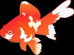 金魚のイラスト8