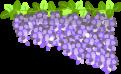 藤の花のイラスト2