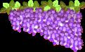藤の花のイラスト3