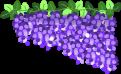 藤の花のイラスト4