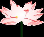 蓮の花のイラスト1