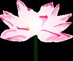 蓮の花のイラスト3