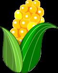 トウモロコシのイラスト1