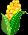 トウモロコシのイラスト2